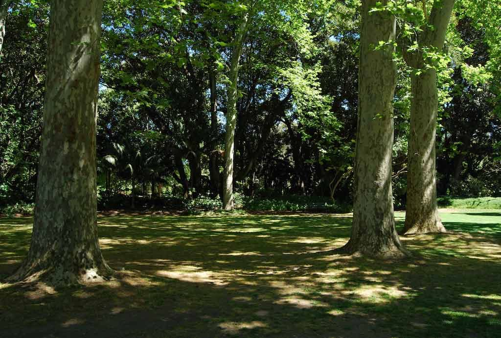 Dappled_Shade_Adelaide_Botanic_Garden