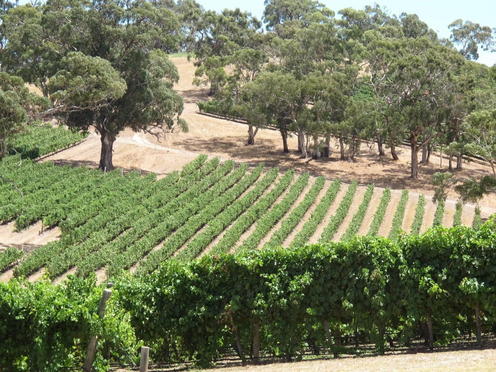 Longview winery adelaide